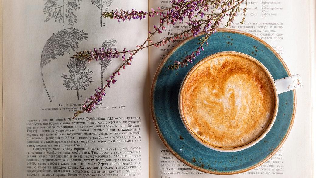 Kaffeem Blume