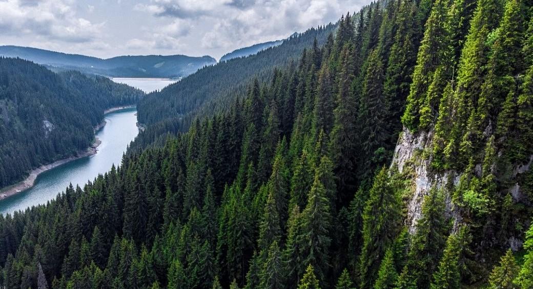 Sibirischer Wald